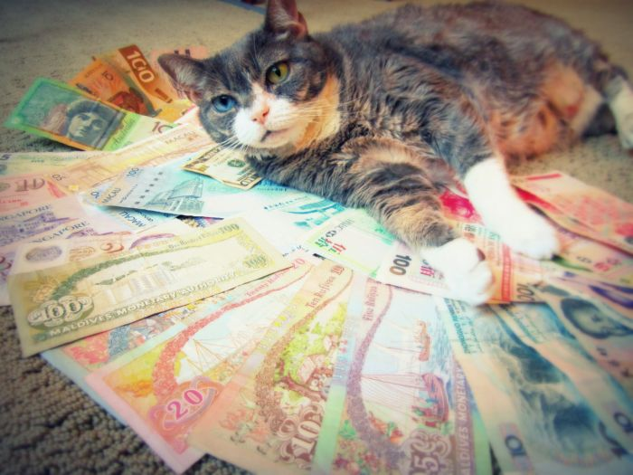 Cats and Cash