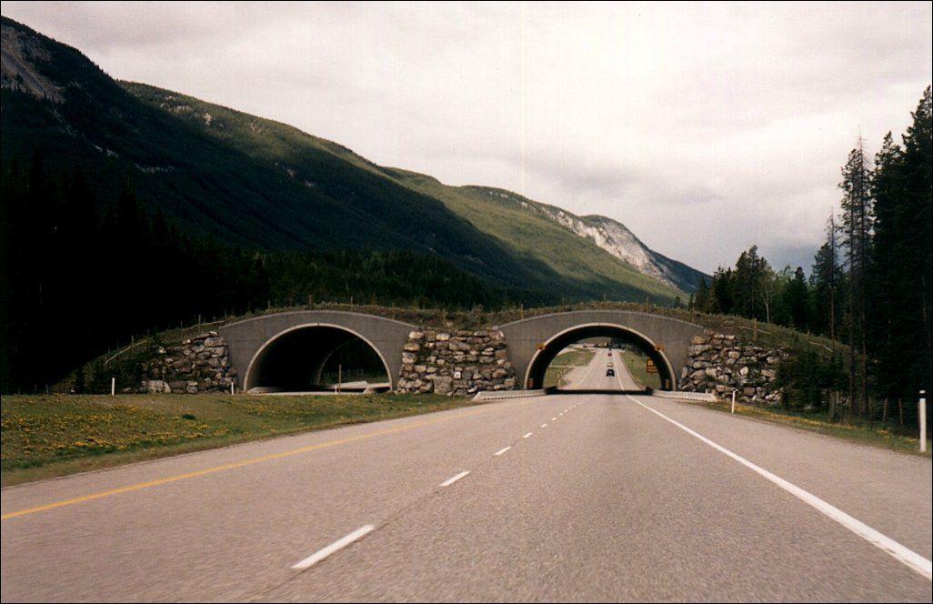 Animal Bridges Across Highways