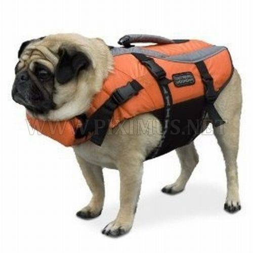 Pugs in life jackets