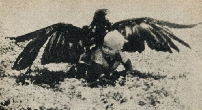 Eagle Steals Baby. Fake?