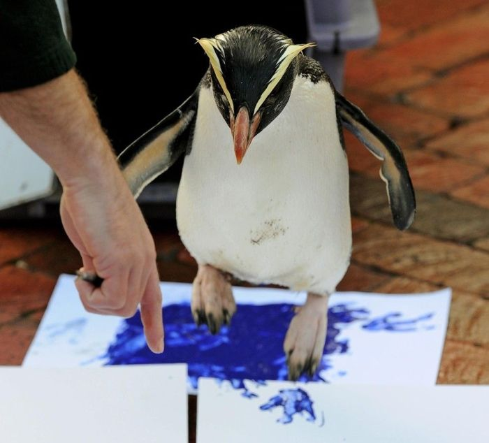 Animals Signing a Petition