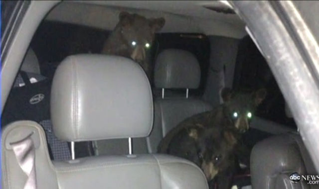 Furry Friends Busted