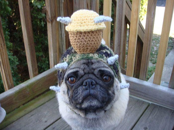 Sweethoots, Cute Pug Hats