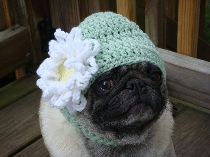 Knitting Pattern For Pug Hat : Sweethoots, Cute Pug Hats Animals