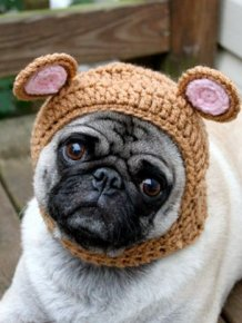 Sweethoots, Cute Pug Hats