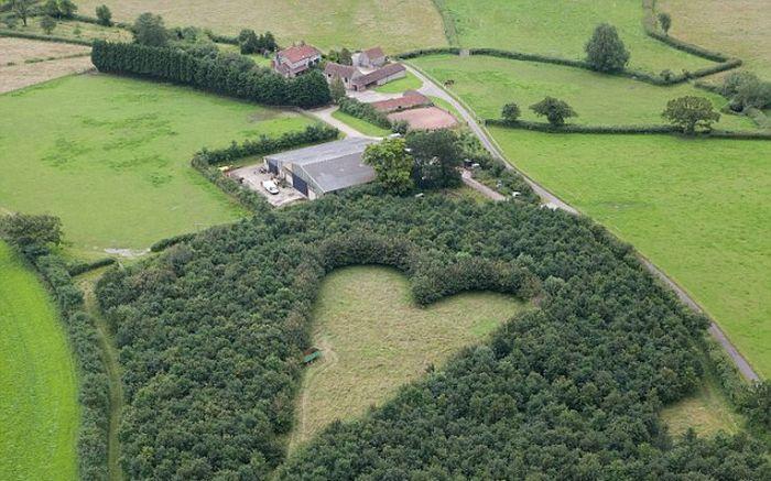 Heart of Oaks