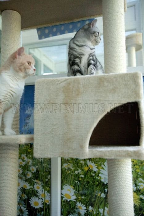 Luxury Hotel for Cats