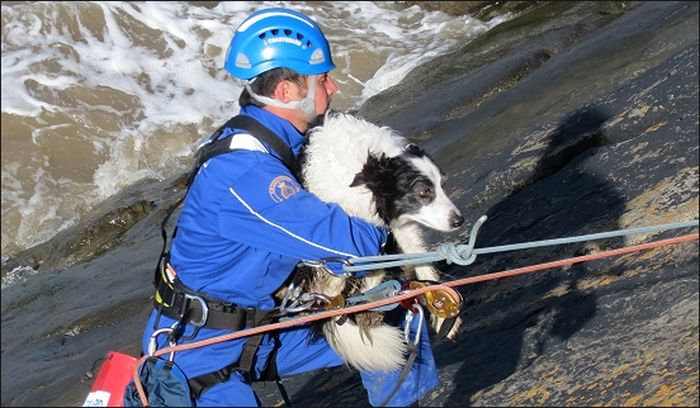 Coastguards Save Stranded Dog