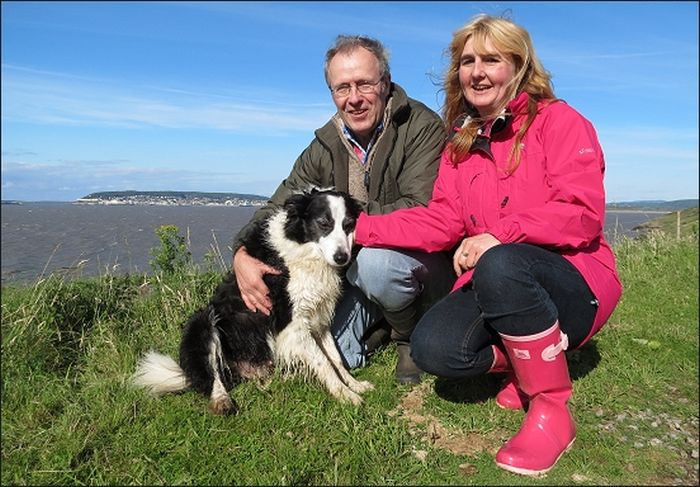 Coastguards Save Stranded Dog