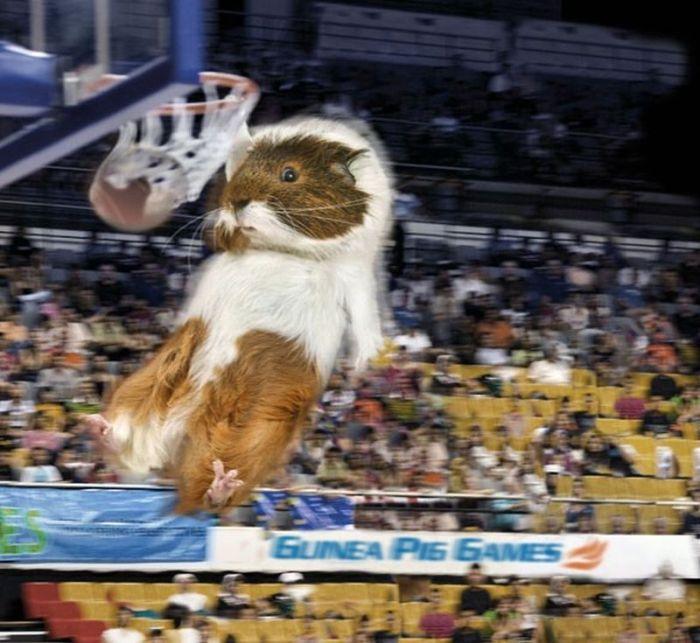 Guinea Pig Games 2013 Calendar