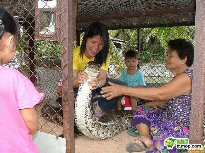Playing with a Large Snake