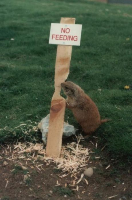 Funny Animal Signs