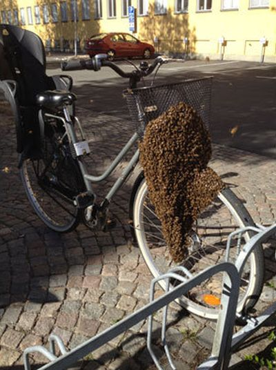 Swarm of Bees Claim Woman's Bicycle in Sweden