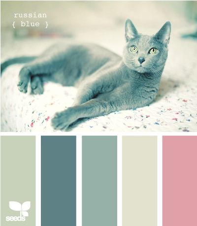 Kittenish And Puppyful Color Palettes
