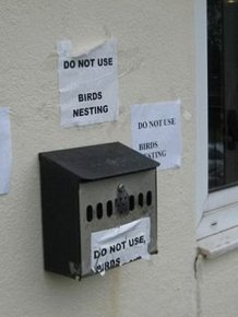 Nest in the Mailbox
