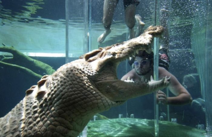 Diving with Crocodiles