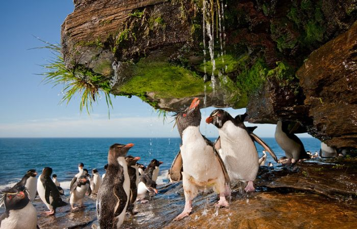 Penguins Take a Shower
