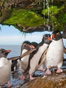 Penguins Take a Shower