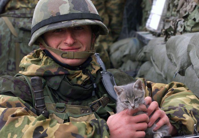 Cats at War