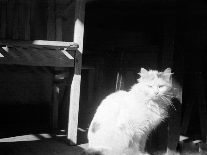 전쟁의 고양이