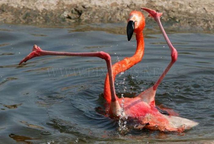 Flamingo Fail