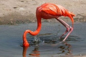Flamingo Fail