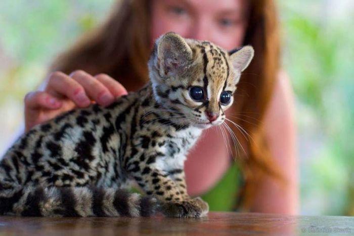 Cute Animals, part 8