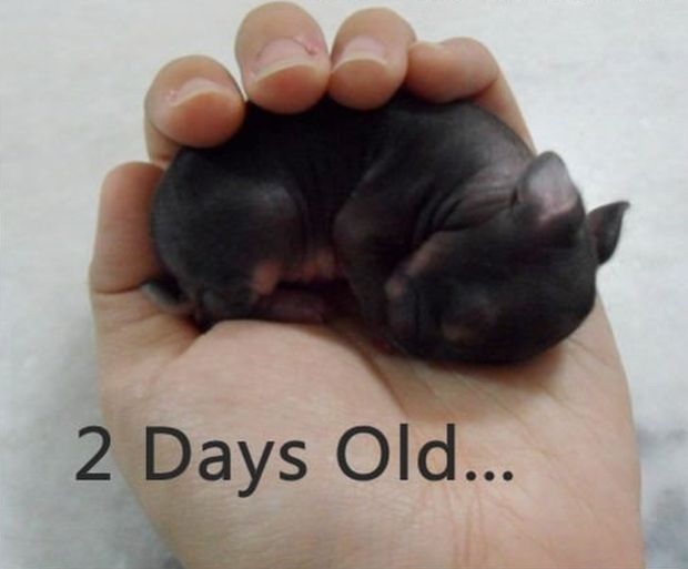 Just a Baby Bunny...