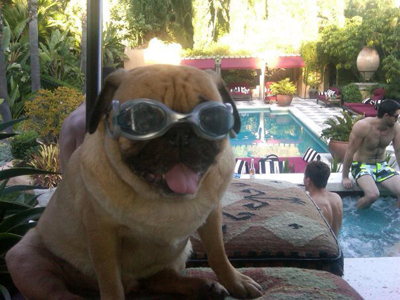 That Is One Hell of a Pug