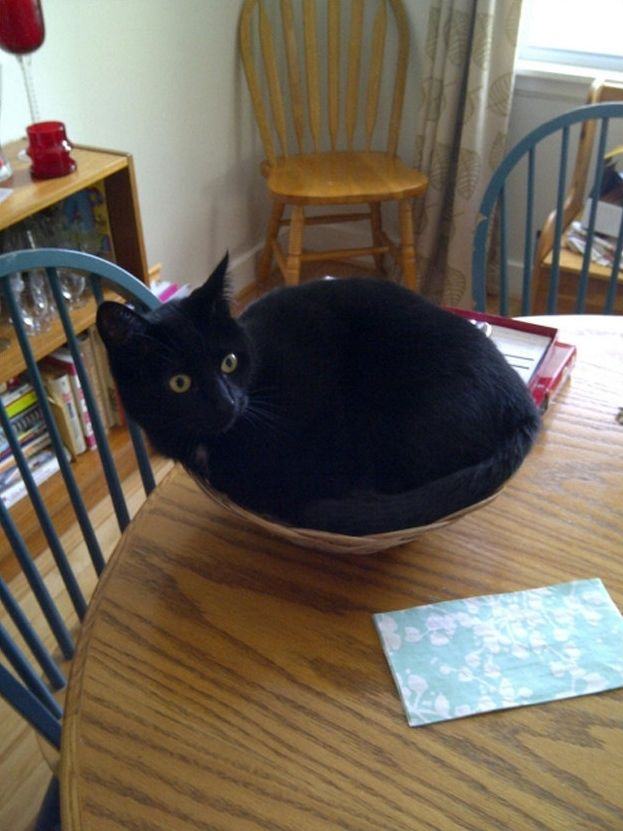 Perfect Places for a Cat to Rest