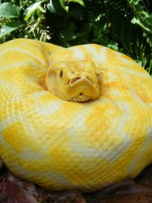 How Would You Like a Python for Your Birthday?