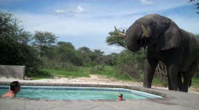 What Happens When You Build a Pool Somewhere in Africa