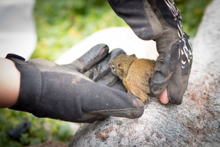 The Rescue of a Baby Squirell