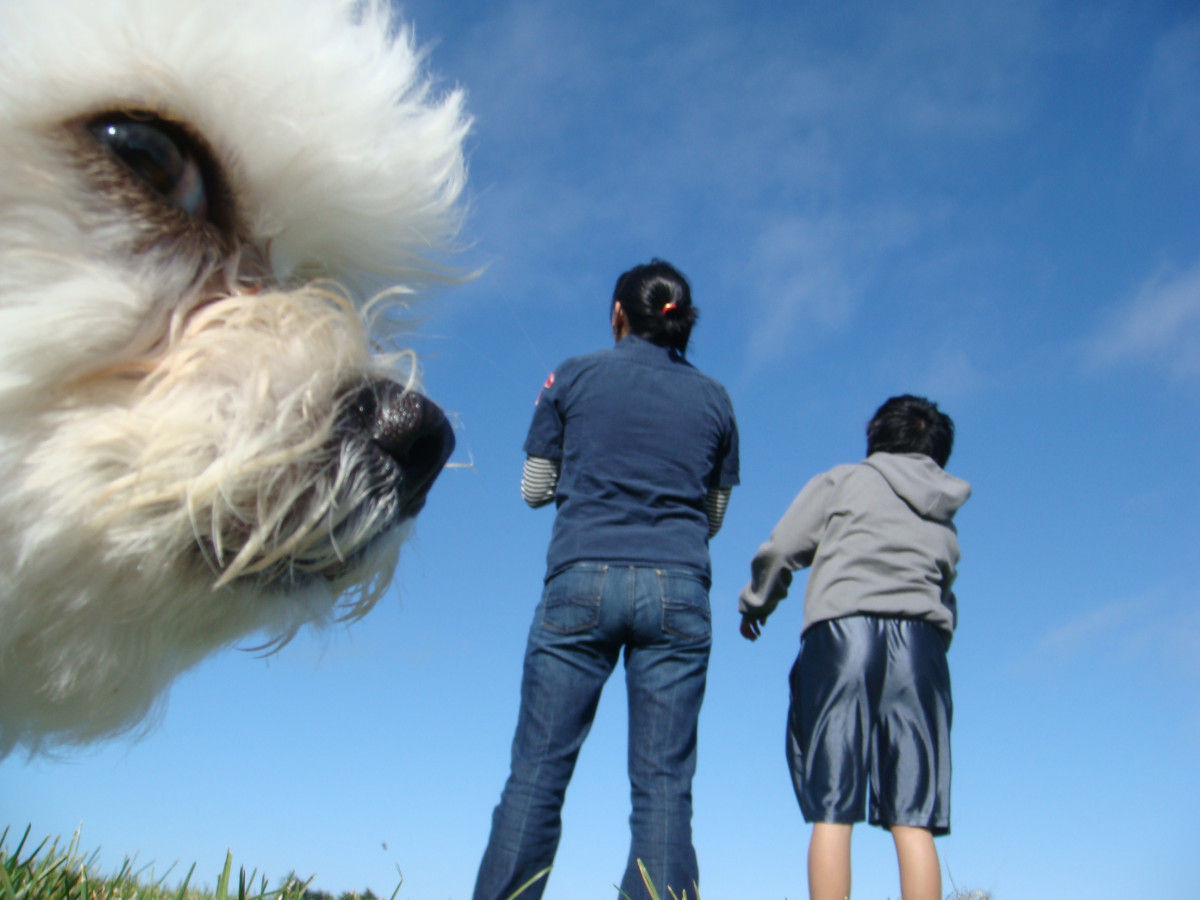 The Ultimate Animal Photobombs Collection
