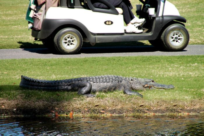 The Most Extreme Golf Field Ever