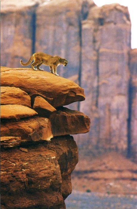 Amazing Animal Pictures, part 2