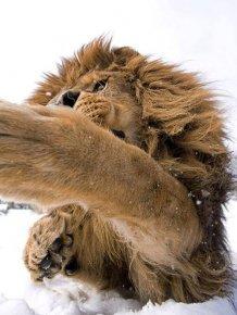 Amazing Animal Pictures