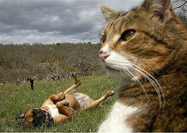 동물의 왕국
