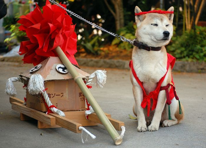 Dogs In Japan Have Awesome Fashion Animals