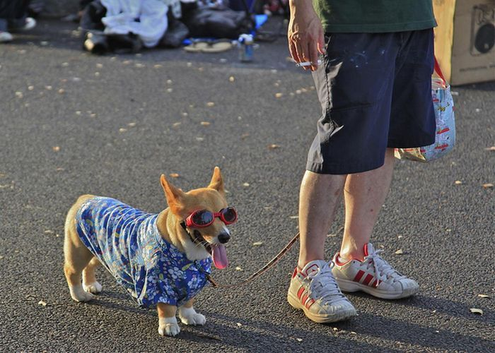 Dogs in Japan Have Awesome Fashion