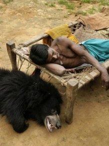 Pet Bear from India