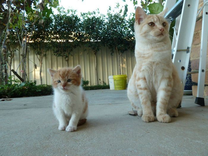Animal Kids That Look Like Their Parents