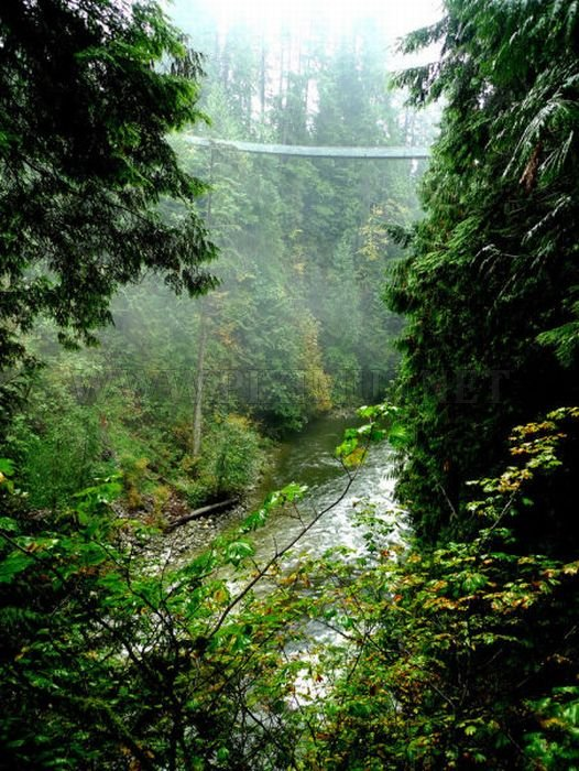 Fascinating Capilano Suspension Bridge