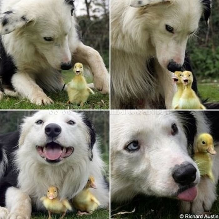 The Cutest Animal Friendship