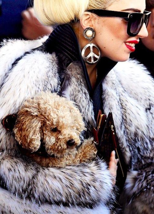 Lady Gaga and Her New Dog Fozzi