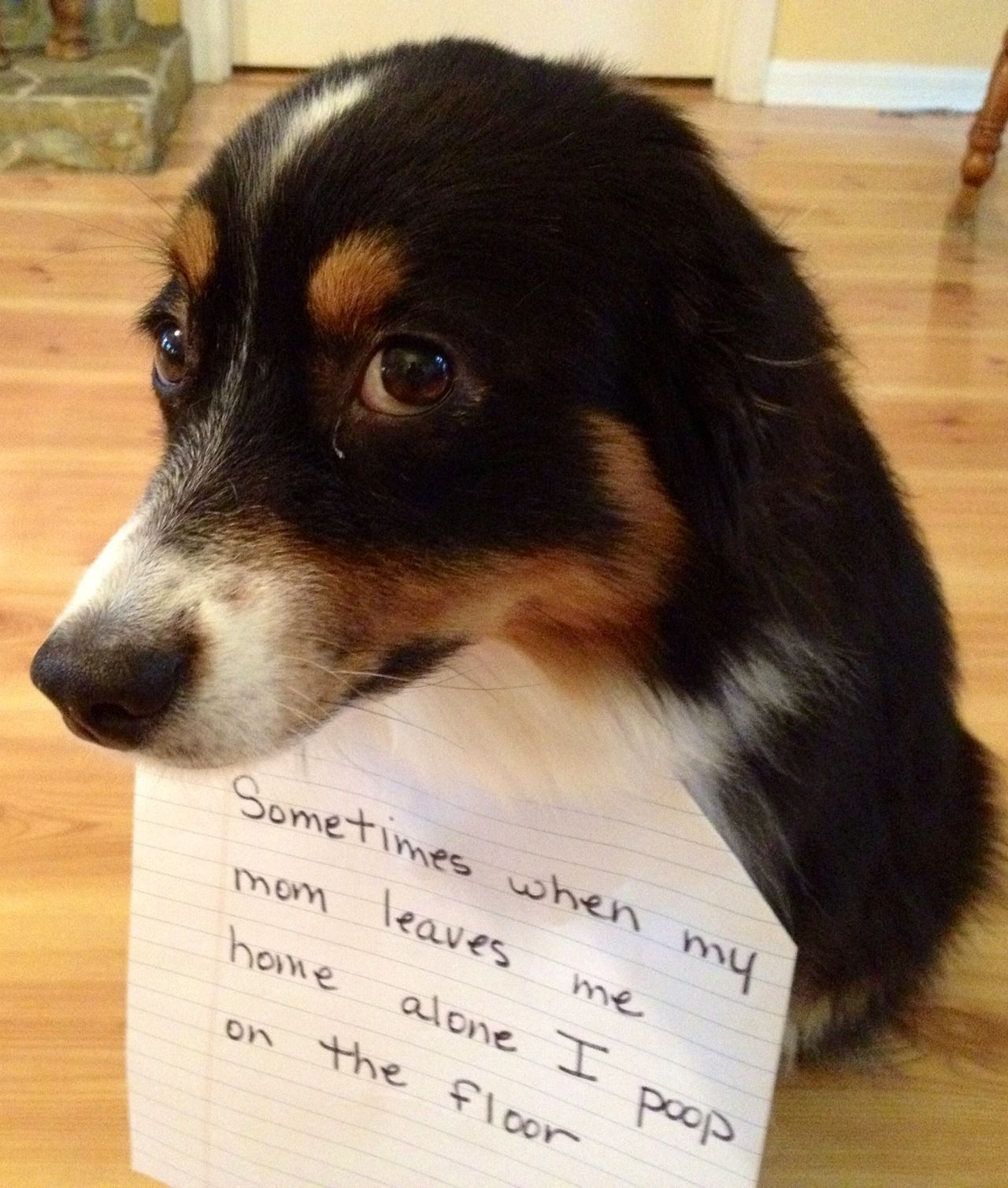 Bad Dogs Publicly Shamed