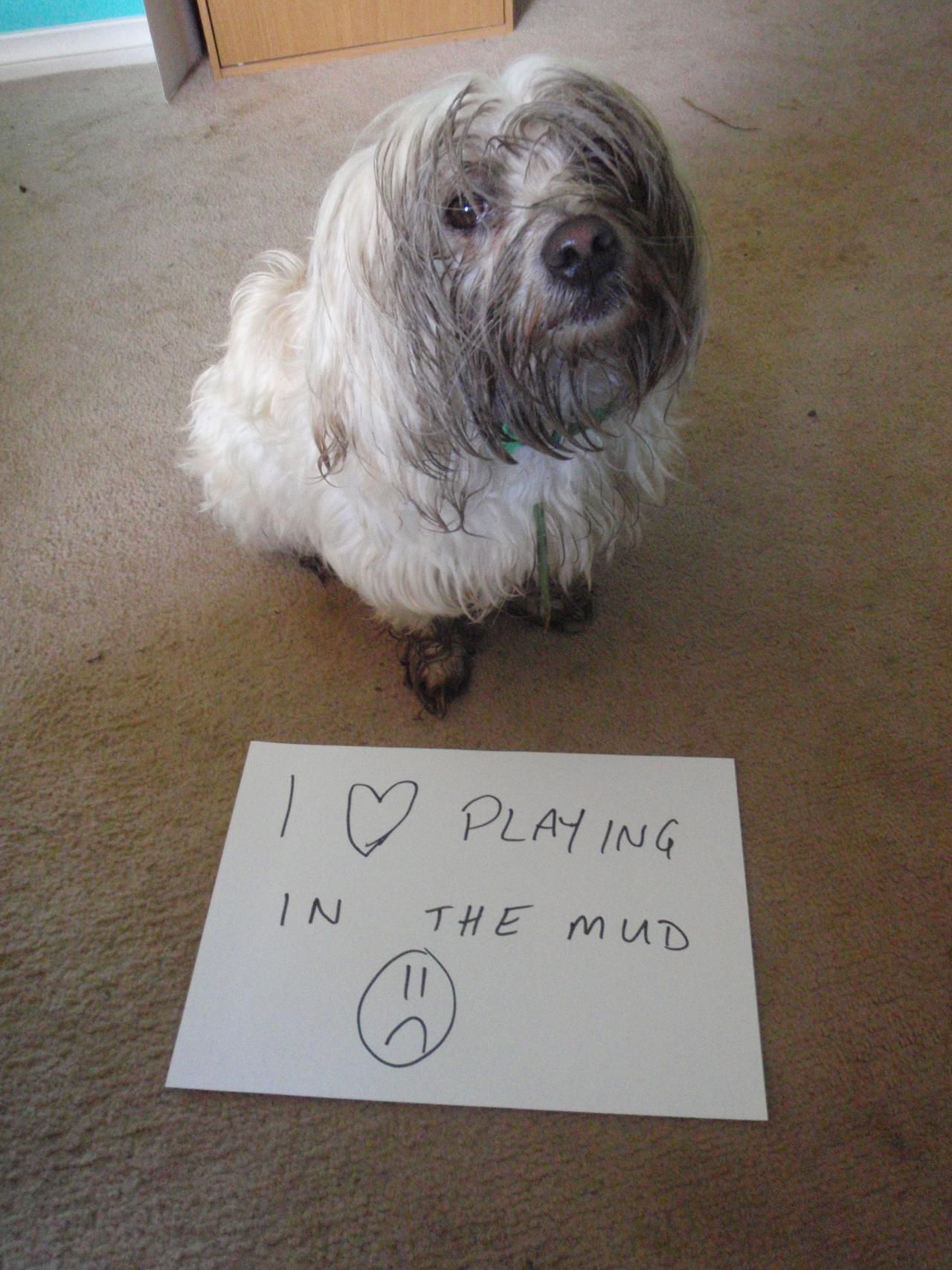 Bad Dogs Publicly Shamed Animals