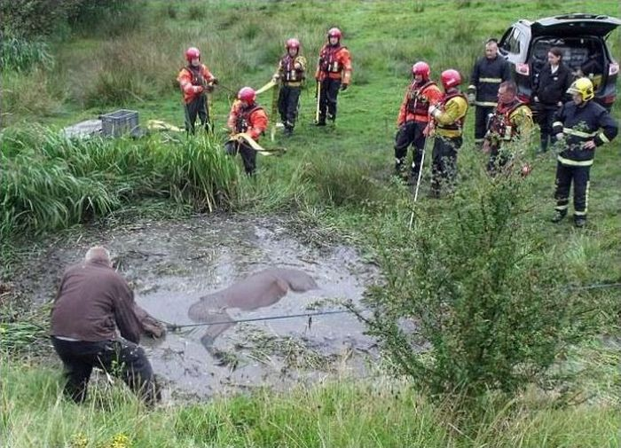 Horse Saved from a Deadly Muddy Pond