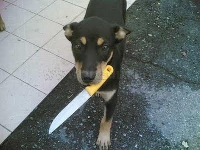 Dangerous Home Pets