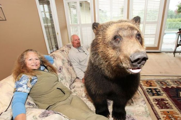 Pet Grizzly Bear